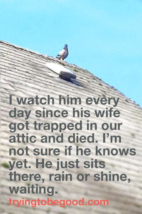 He just sits there, rain or shine, wating. —TryingtobeGood.com